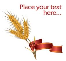 麦穗稻穗图片
