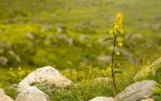 小花花朵图片