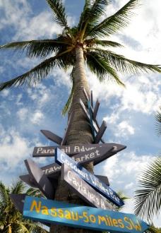 椰树路标图片