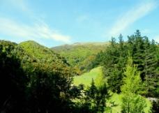 森林公园图片