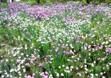 杭州西溪湿地 野花图片
