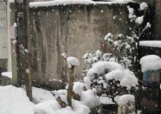 落雪 小院图片