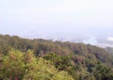 树林和城市图片