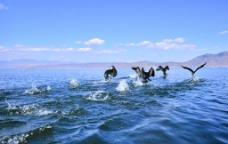 洱海精灵图片