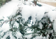 雪的近拍图片