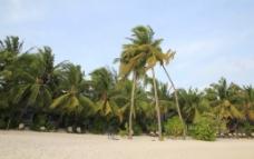 椰林小屋图片