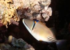 深海观赏鱼图片