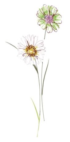 韩国 手绘花 小花图片