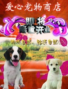 宠物商店开业海报图片