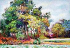 茂盛的林子图片