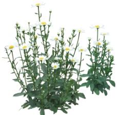 植物 花图片