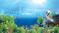 海底世界 美人鱼 珊瑚礁 大海图片
