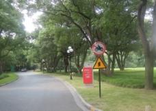 绿树景色图片