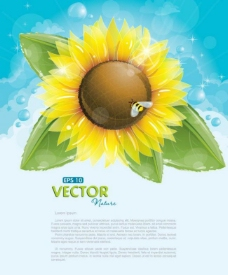 太阳花蜜蜂梦幻背景图片