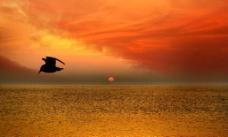 大海 海鸥图片