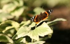 小蝴蝶素材图片