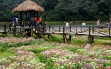 生态公园图片