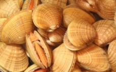 海鲜 贝类图片