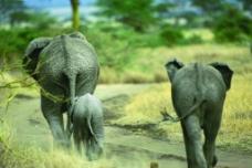 大象的背影图片