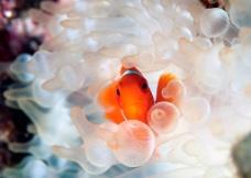 金鱼 珊瑚图片