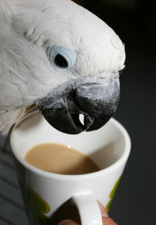 鹦鹉小鸟图片