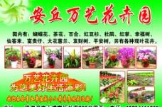 安丘万艺花卉园图片