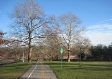 路边的树图片