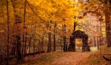 树林 石门图片